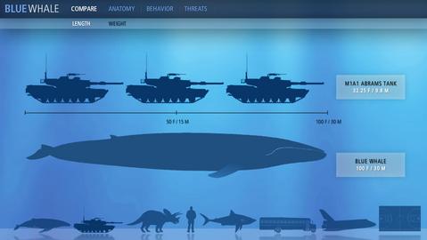 シロナガスクジラの魅力満載「Kingdom of the Blue Whale」