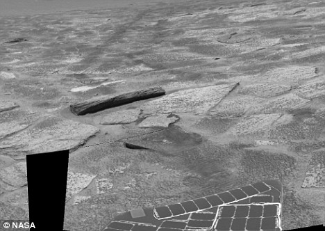 火星に木っぽいのが落ちてる件