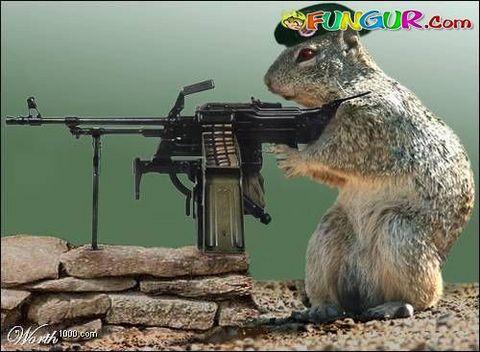 squirrel8sb