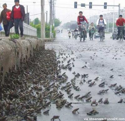 地震前に大発生したカエル