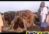亀のような謎の巨大生物の死骸