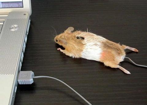リアルマウス