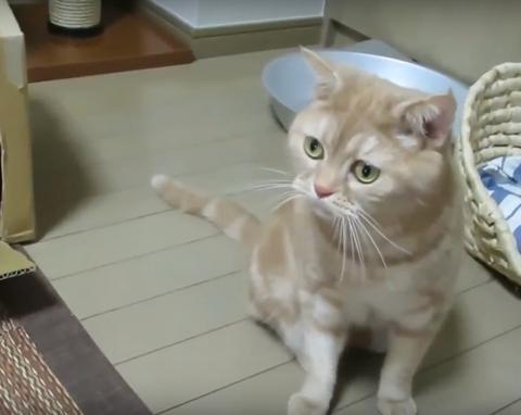 じゃれる 猫