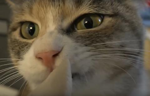 ささみ大好き猫