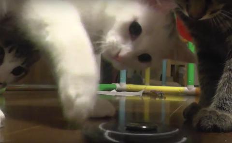 ハンドスピナー 猫