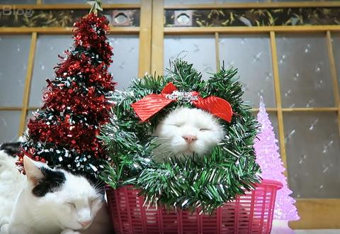 クリスマス のせ猫