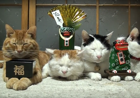 のせ猫 お正月
