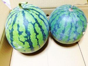yasashii-suika (2)