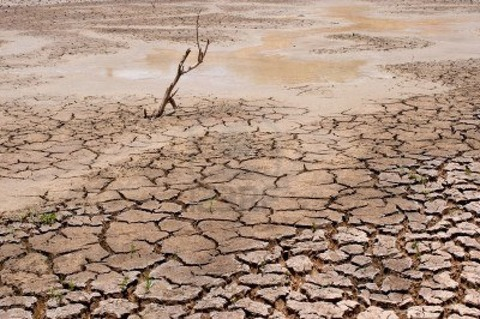 14188162-dry-earth-in-the-dry-season-in-thailand