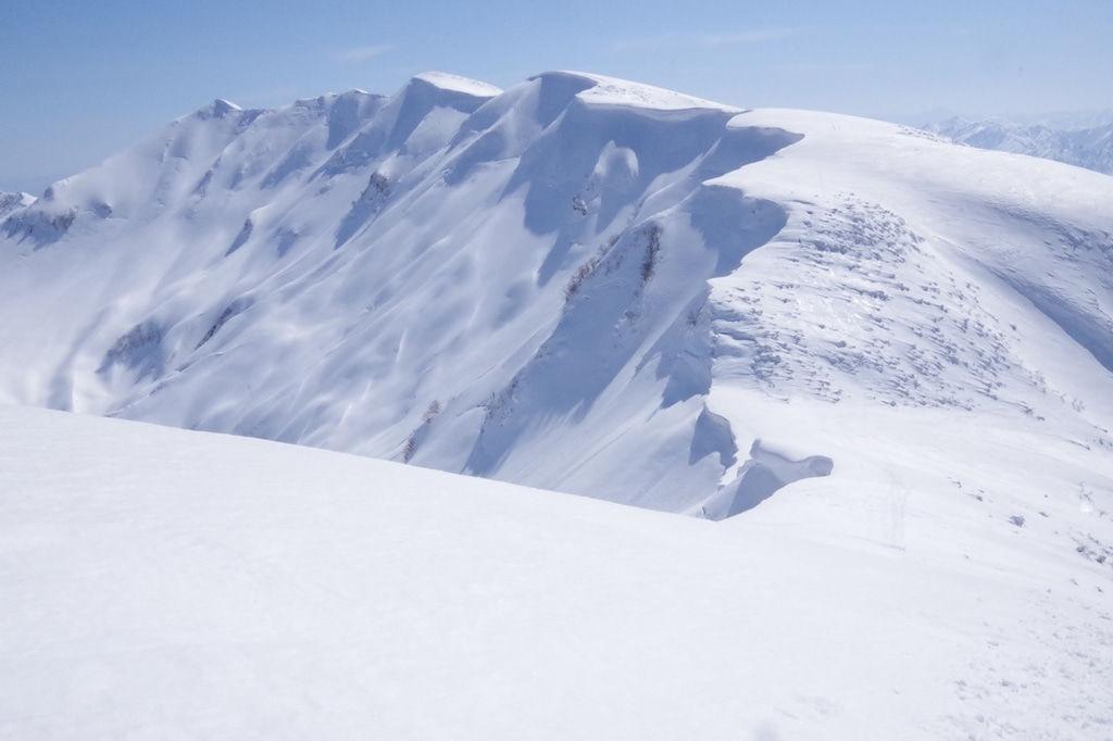 雪山で遭難し力尽きた猫が発見される