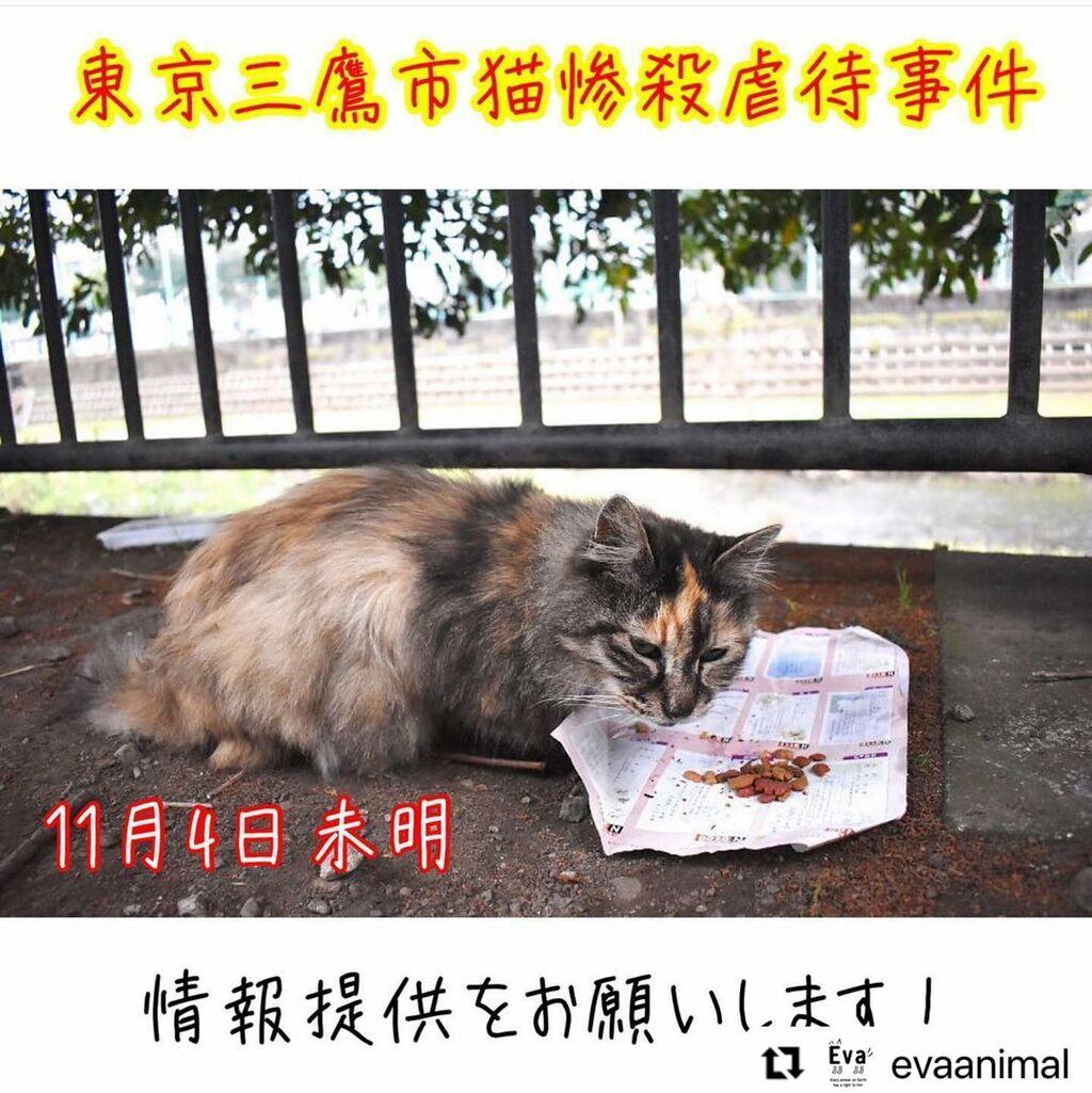 【拡散希望】人間が大好きで信じ切っていた猫が惨殺されました