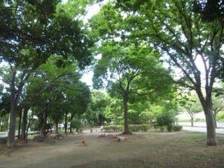08公園の蝉しぐれ