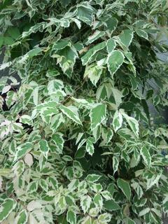 07お散歩途中の葉っぱ