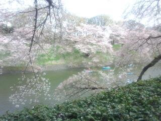 04心躍る桜の季節