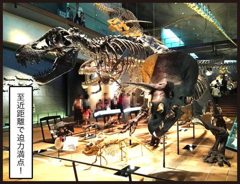 いのちのたび博物館に行ってきました5