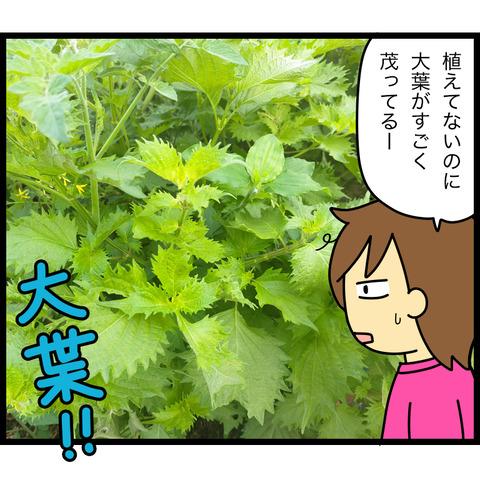 庭になる大量の大葉を消費してみた