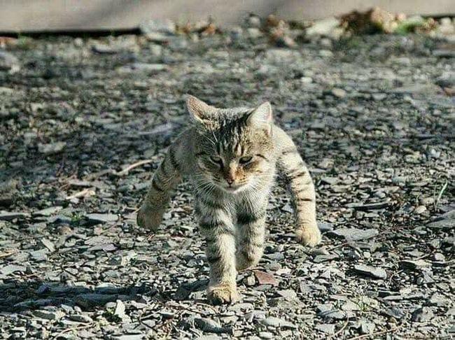 二足の猫が可愛かったので粘土で再現してみましたwwwwwwww