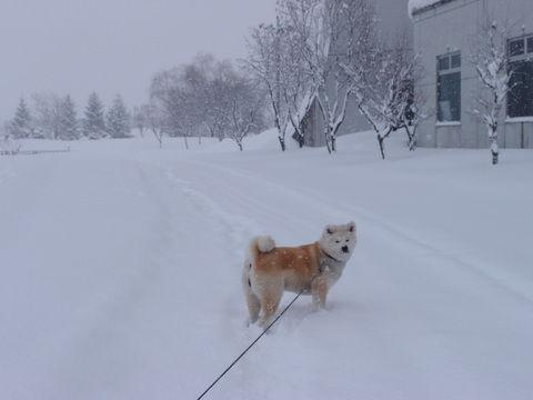 大雪の日の出勤