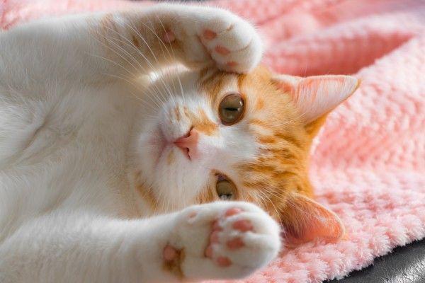 猫は賢い動物なので、やってはいけない行為をした場合にきちんと教えればやらなくなります