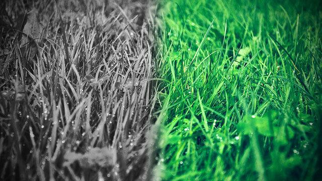 隣の芝生が青く見えるやつはこうすると楽しめるようになるぞwwwwwwwwwwwwwwwww