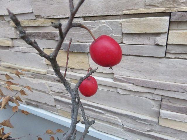 盆栽のヒメリンゴ