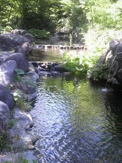 20140614水上鈴森池