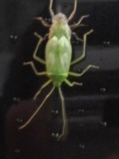 20140622虫どっちが頭?