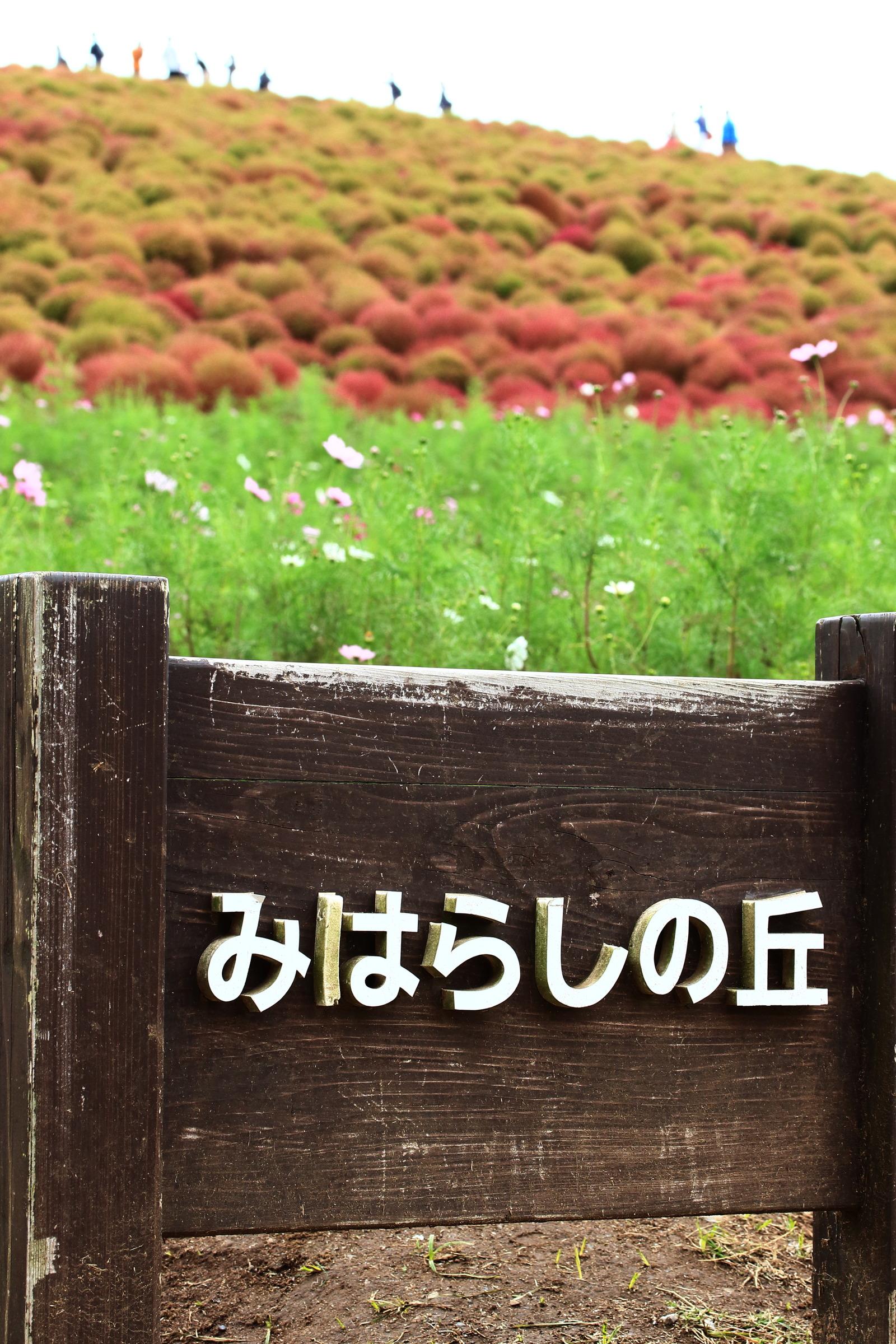 IMG_7624-1