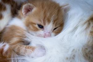 kitten-3419164_640