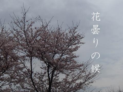 11652_hanagumori