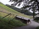 ココワイン2009_01
