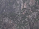 崖に生える木々1