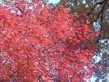 かえで園の紅葉3