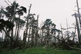 立ち枯れの森大台ケ原06