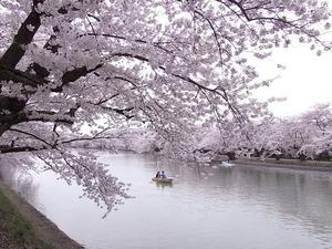 弘前城満開の桜のトンネルとお堀