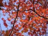 休憩所の紅葉5