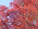 休憩所の紅葉4