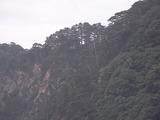 崖に生える木々2
