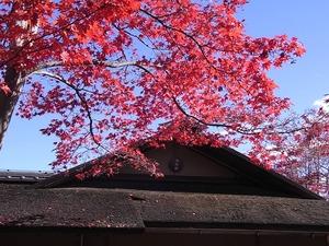 昭和記念公園の茶室風の建物と紅葉02