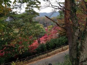 もみじ谷の展望台からの紅葉