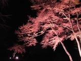 長瀞紅葉ライトアップ16