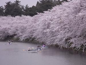 弘前城満開の桜のトンネルを外から見た姿