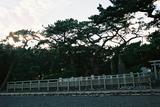 新日本三景三保の松原4