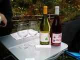 2008ココワイン収穫祭03