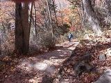 湯滝の山道