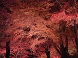 長瀞紅葉ライトアップ08