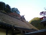 紅葉の古峰神社05