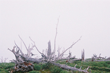 立ち枯れの森大台ケ原14