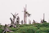 立ち枯れの森大台ケ原23