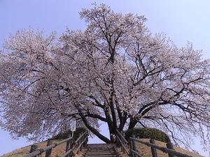 つがの里桜の階段登り口